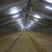 agrener avicultura