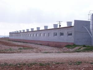 agrener-instalaciones-para-porcino 26431218195 o